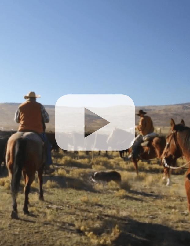 Ranching Video Redmond 05
